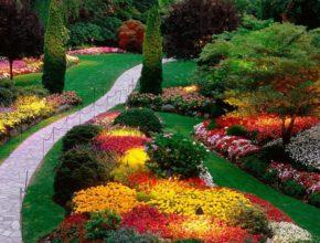 Цветовая гамма вашего сада
